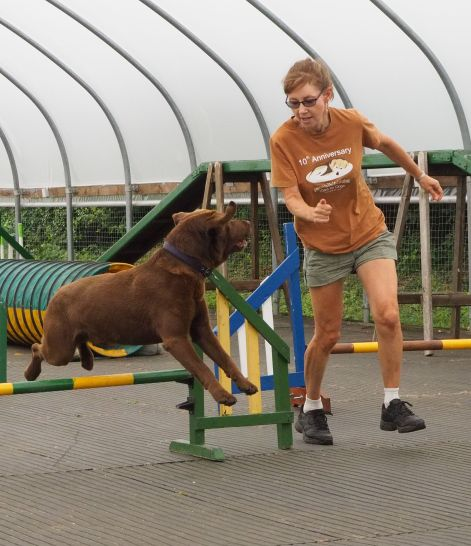 Taking Bruno through his paces at agility training in the UK