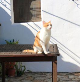 Riogordo-2016-04-24-053