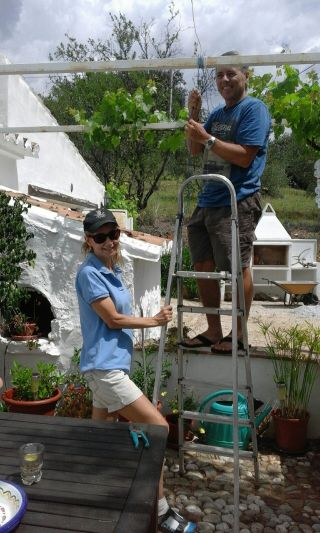 Training the grape vine