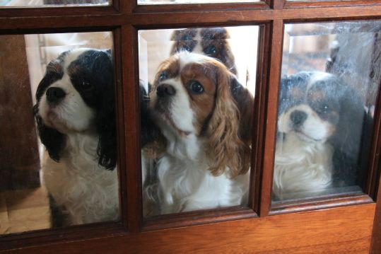We want to come out too