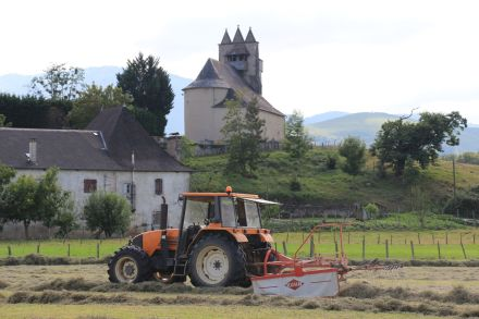 Our next door neighbour harvesting hay