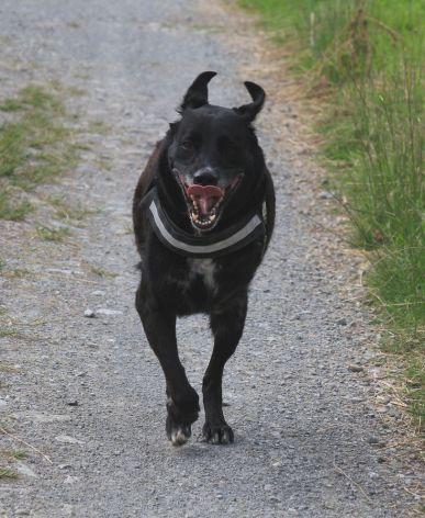 Ulysse loving a run