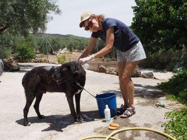 Ulysse getting a bath